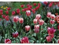 Tablouri-canvas-flori
