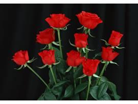 Flowers#101