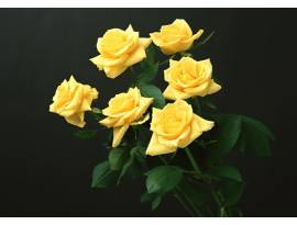 Flowers#102