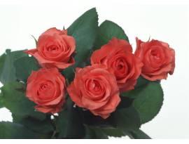 Flowers#103
